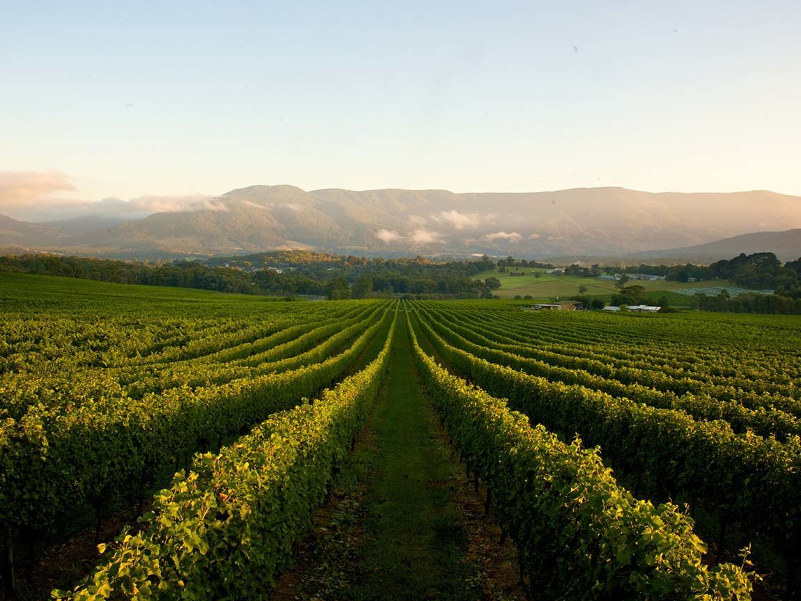 Bulong Estate Winery, Yarra Valley and Dandeong Ranges, Victoria, Australia