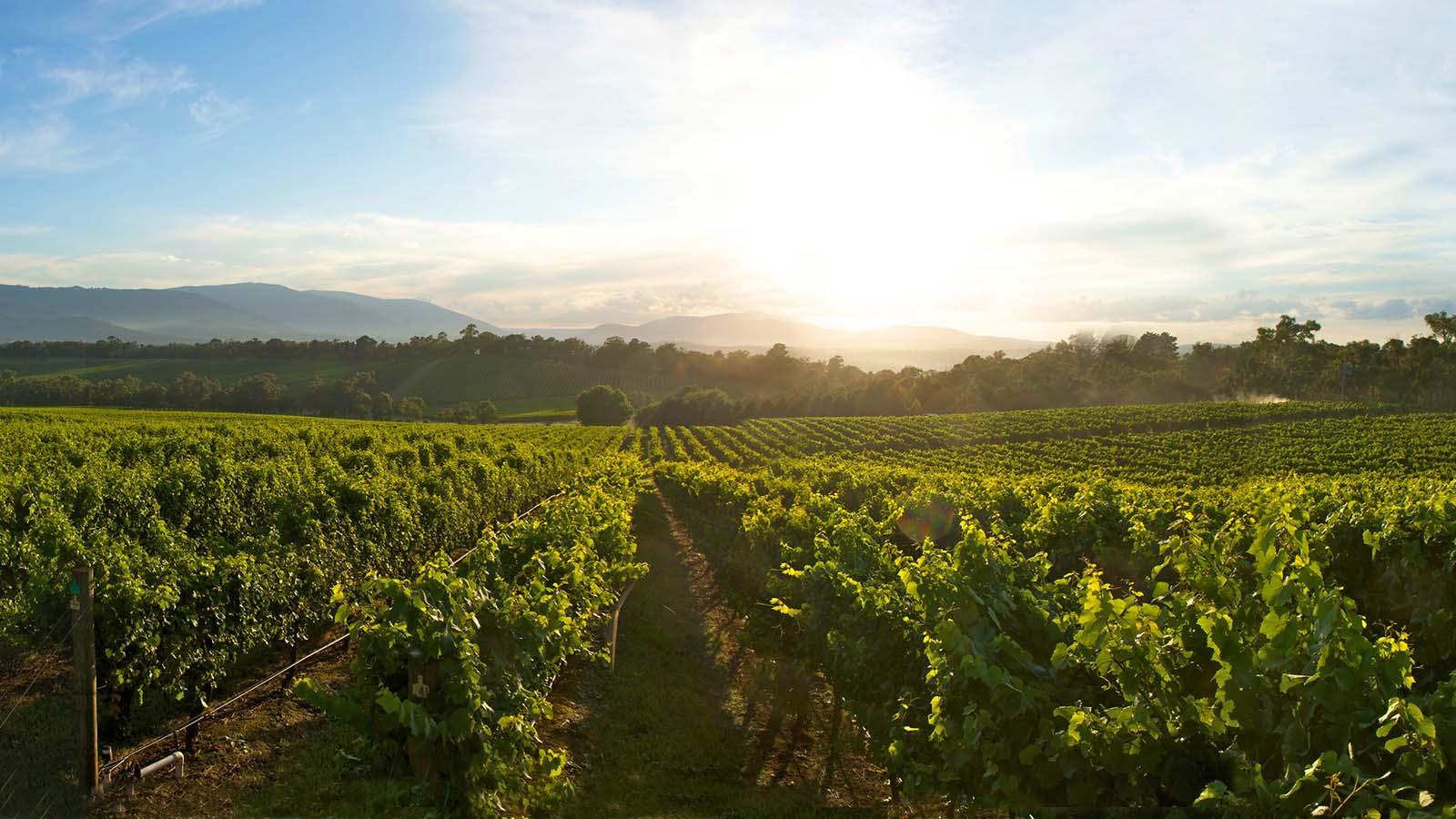 Killara Estate Winery, Yarra Valley and Dandenong Ranges, Victoria, Australia