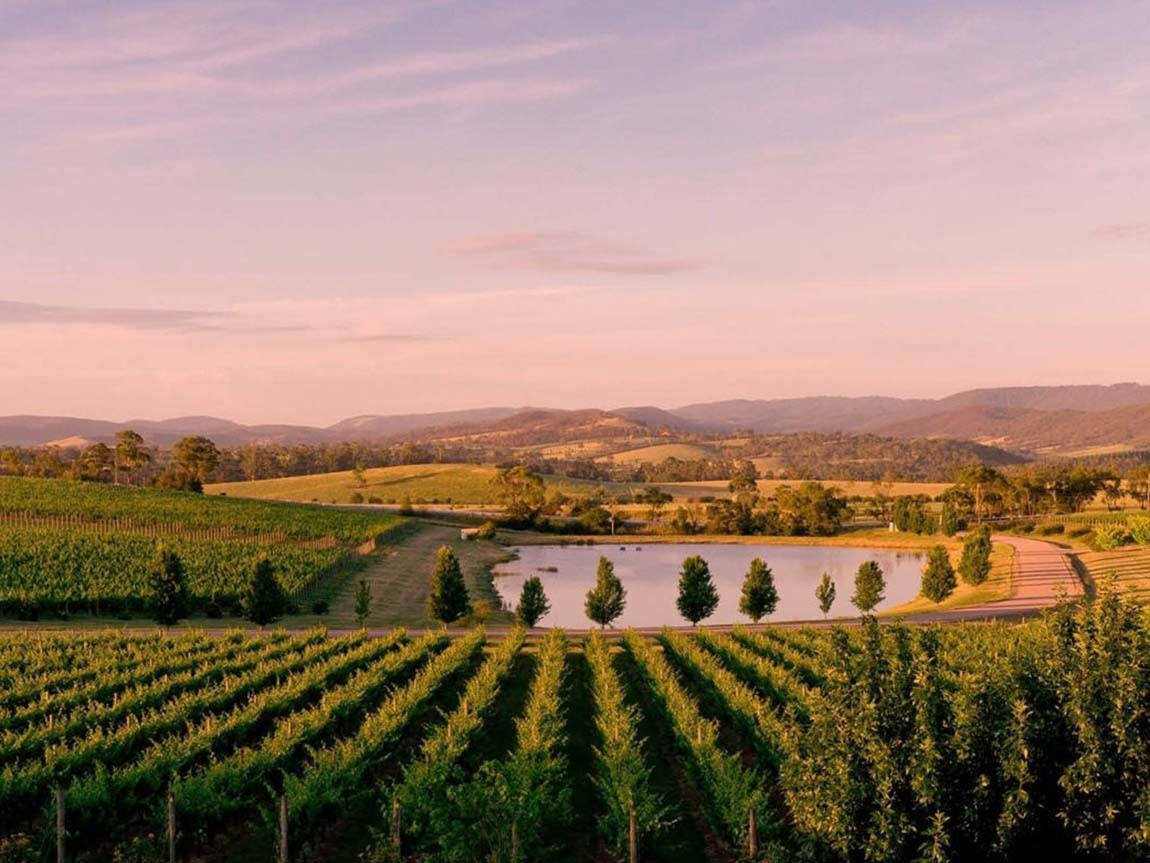 Oakridge Wines, Yarra Valley and Dandenong Ranges, Victoria, Australia