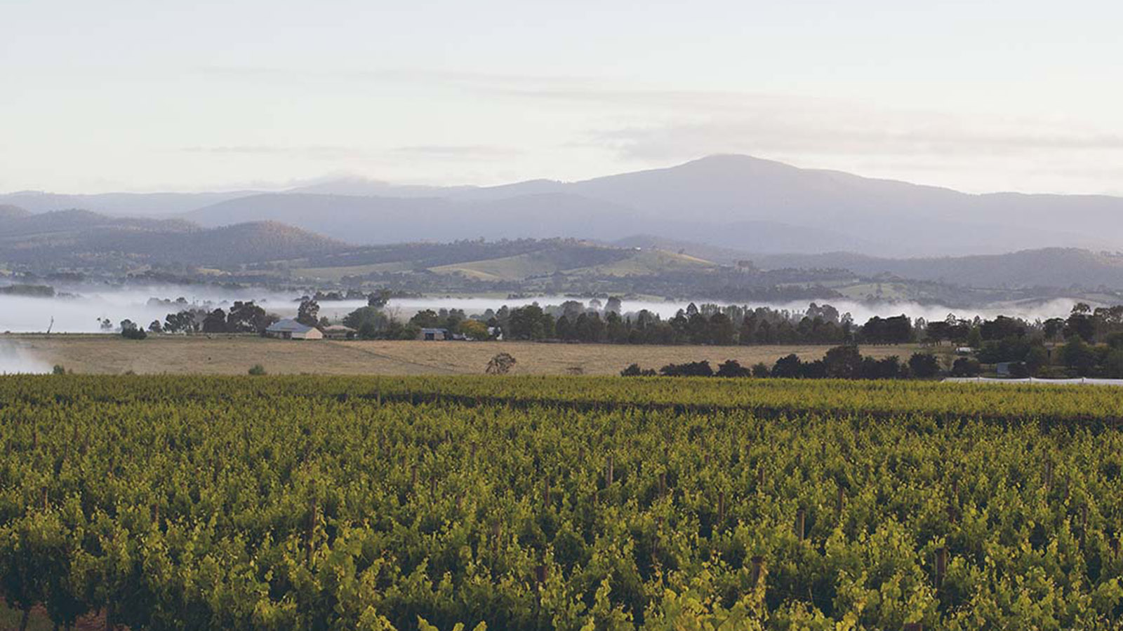 Punt Road Wines, Yarra Valley & Dandenong Ranges, Victoria, Australia