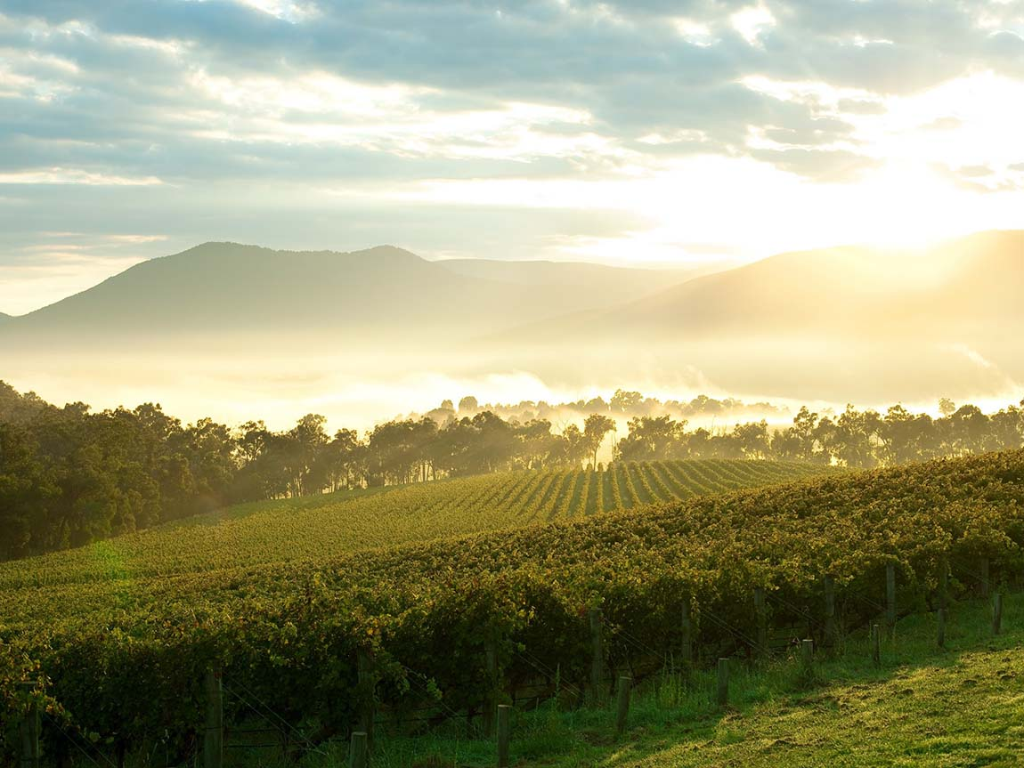 Yarra Valley Vista, Yarra Valley and Dandenong Ranges, Victoria, Australia