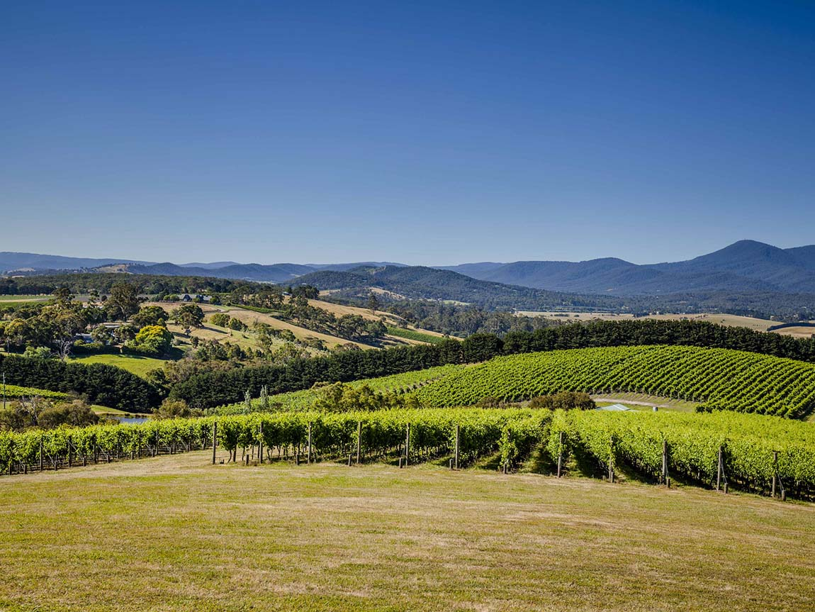 Yarra Valley wineries, Yarra Valley and Dandenong Ranges, Victoria, Australia