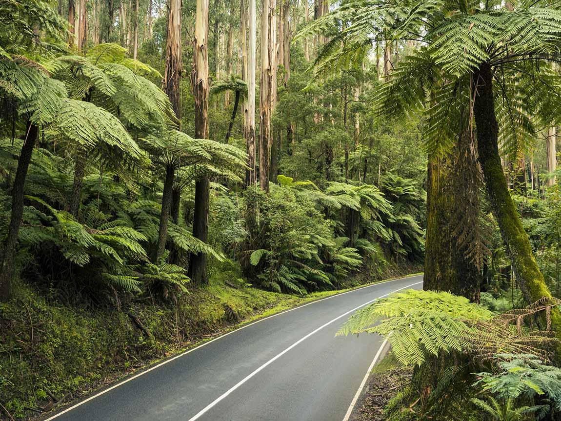 Black Spur, Yarra Valley and Dandenong Ranges, Victoria, Australia