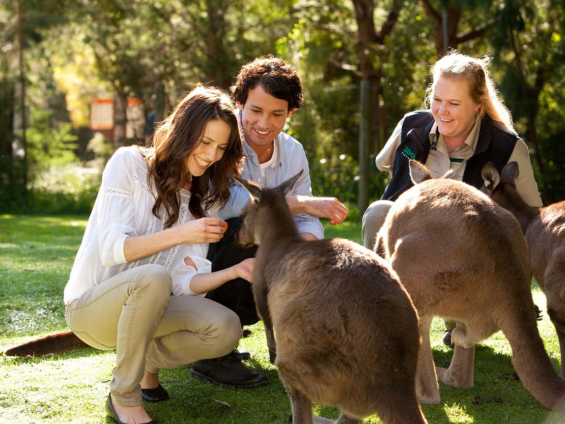 Couple feeding kangaroos at Healesville Sanctuary, Yarra Vallley and Dandenong Ranges, Victoria, Australia