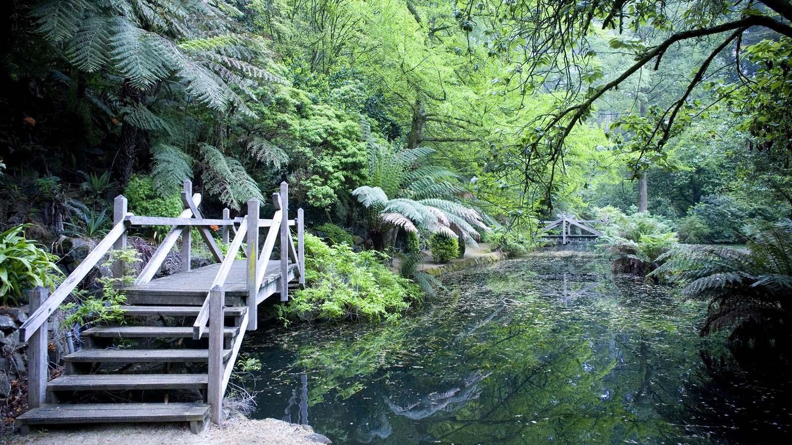 Alfred Nicholas Gardens, Sherbrooke, Yarra Valley and Dandenong Ranges, Victoria, Australia