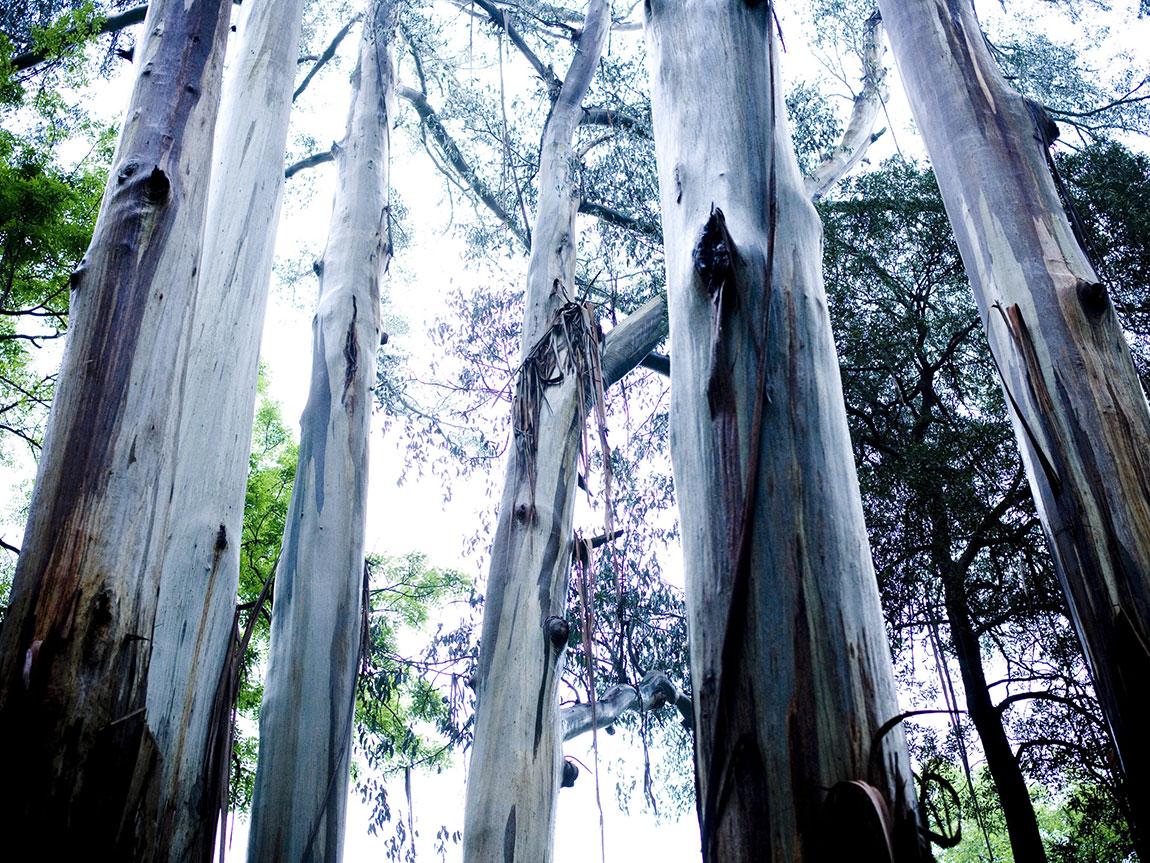Alfred Nicholas Gardens, Yarra Valley and Dandenong Ranges, Victoria, Australia