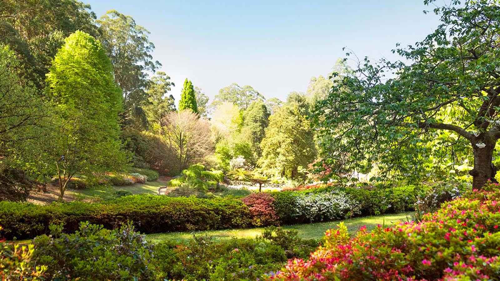 National Rhododendron Gardens, Yarra Valley & Dandenong Ranges, Victoria, Australia