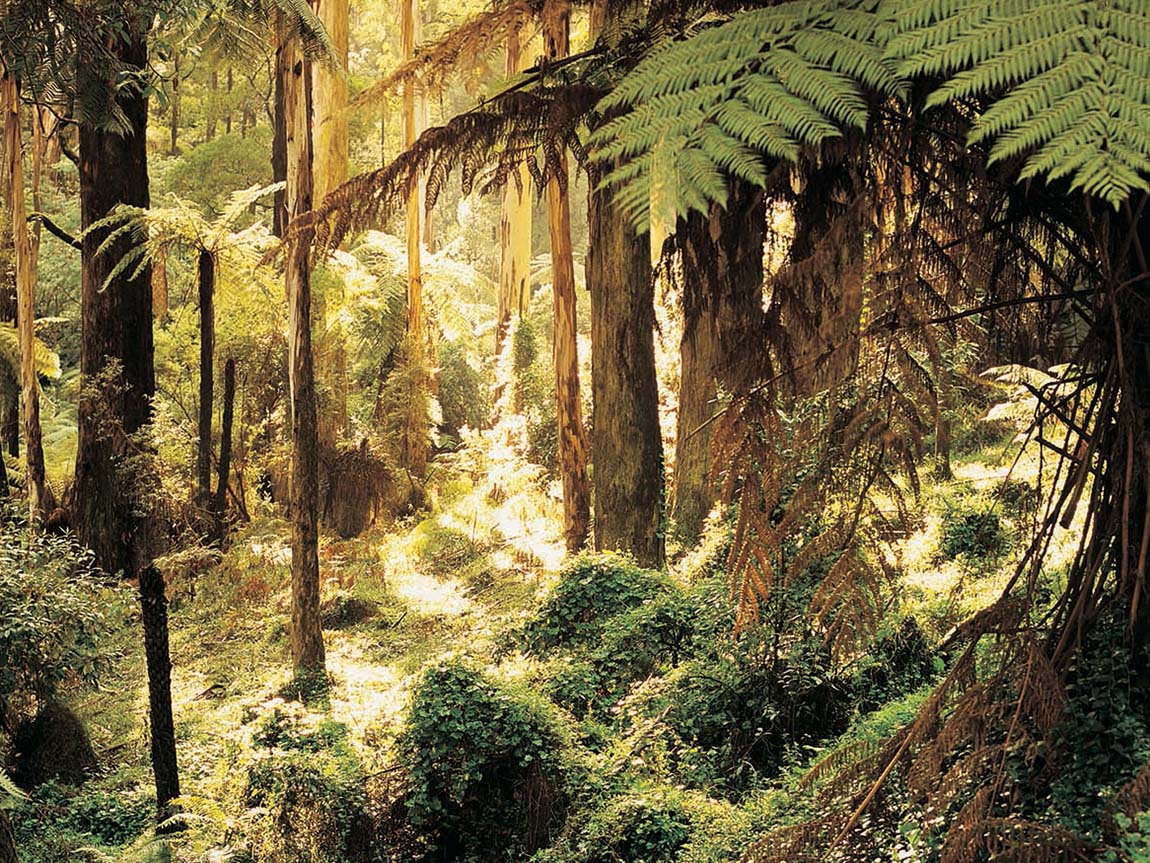 Sherbrooke Australia  City new picture : Sherbrooke Forest, Yarra Valley and Dandenong Ranges, Victoria ...