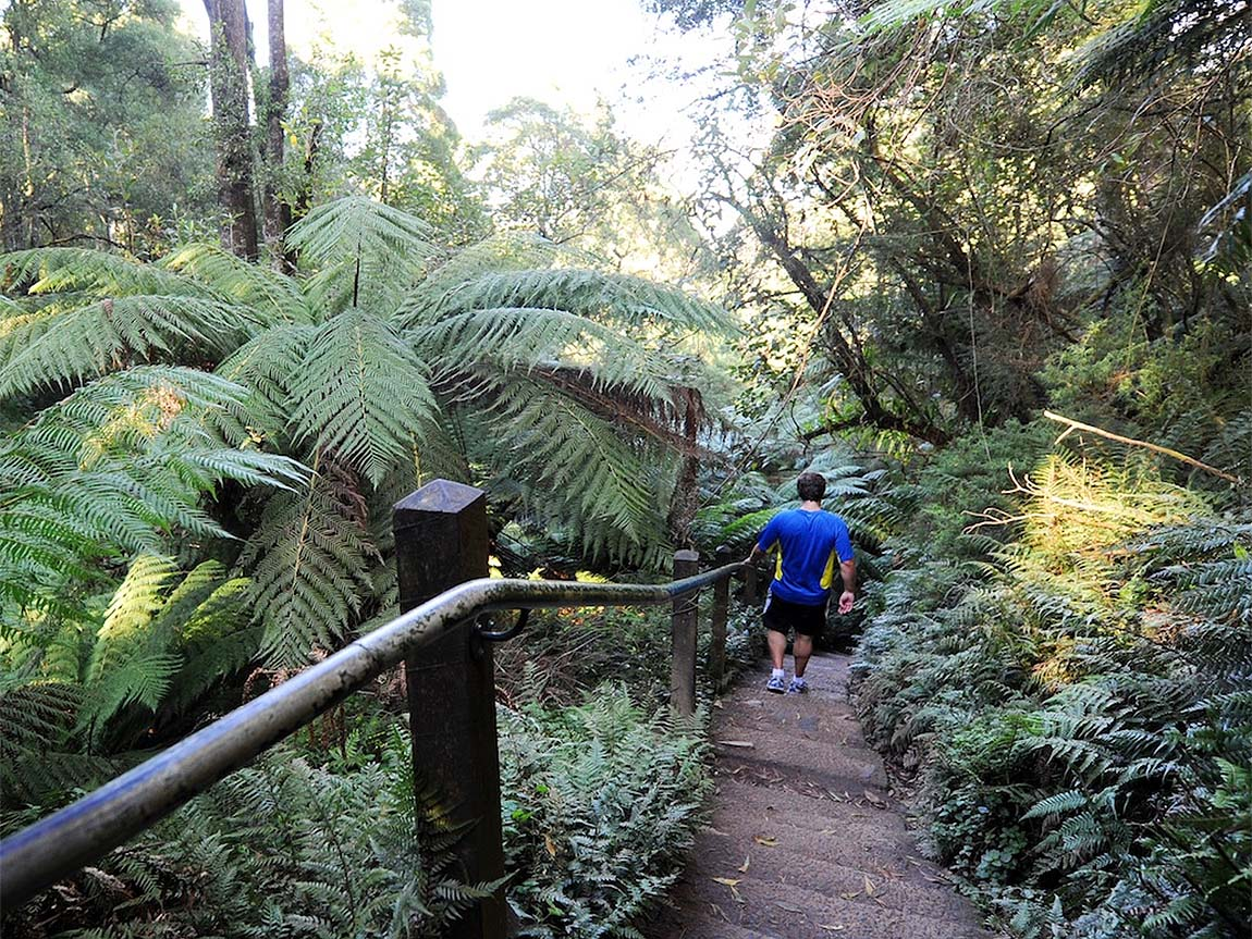 1000 Steps Kokoda Track Memorial Walk, Yarra Valley and Dandenong, Ranges, Victoria, Australia