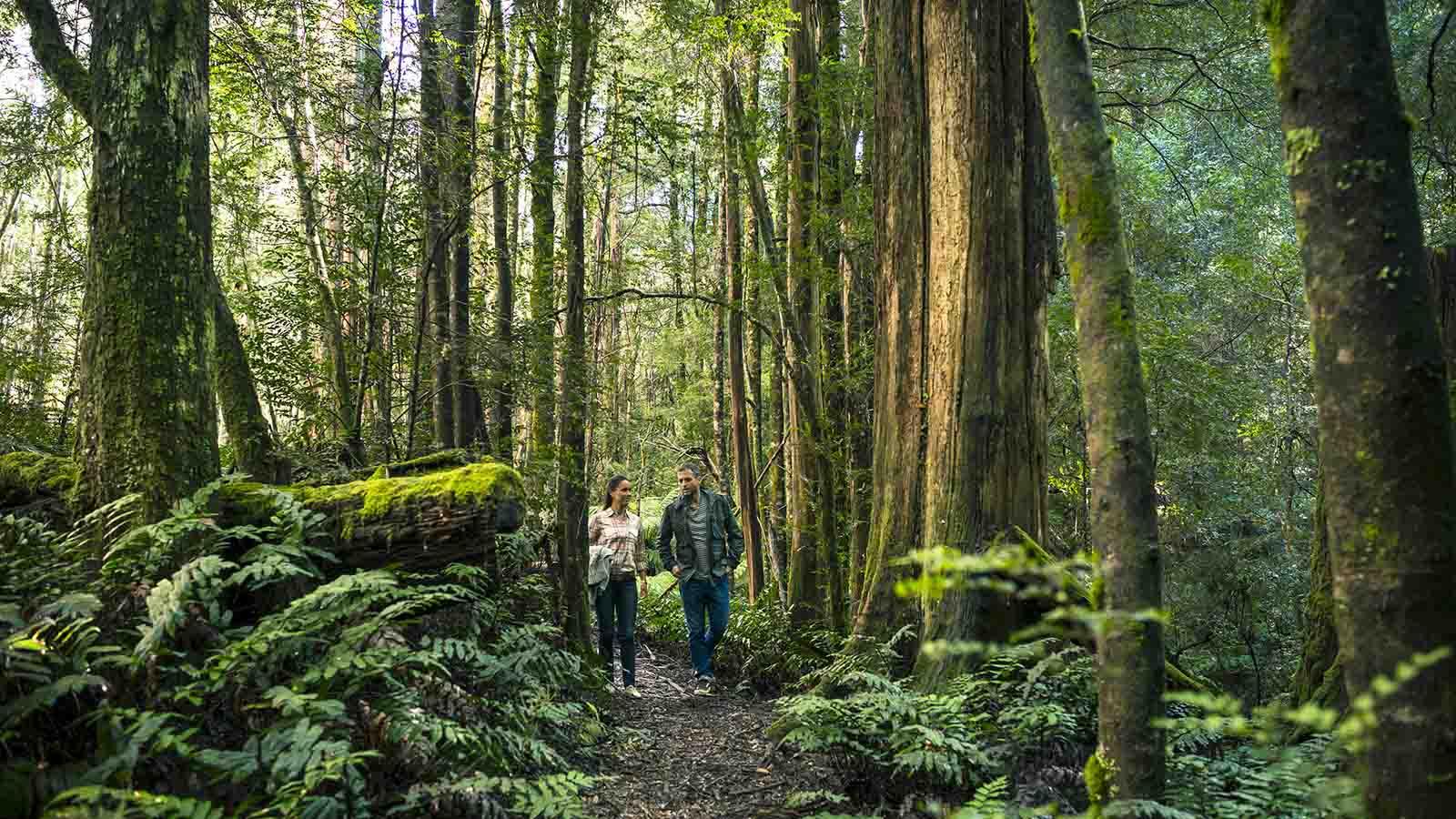 Cumberland Walk, Yarra Valley & Dandenong Ranges, Victoria, Australia