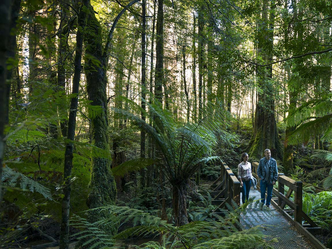 Cumberland Walk, Yarra Valley and Dandenong Ranges, Victoria, Australia