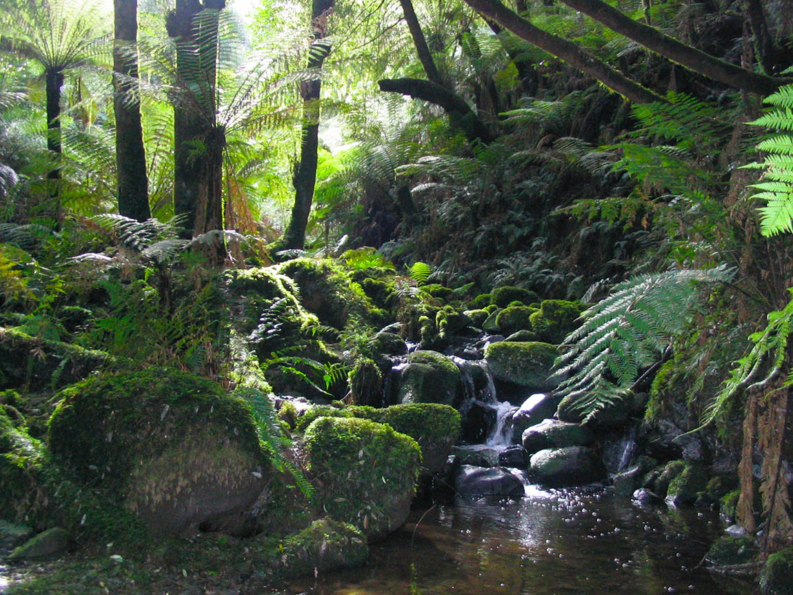 Sherbrooke Falls Trail, Yarra Valley & the Dandenong Ranges, Victoria, Australia