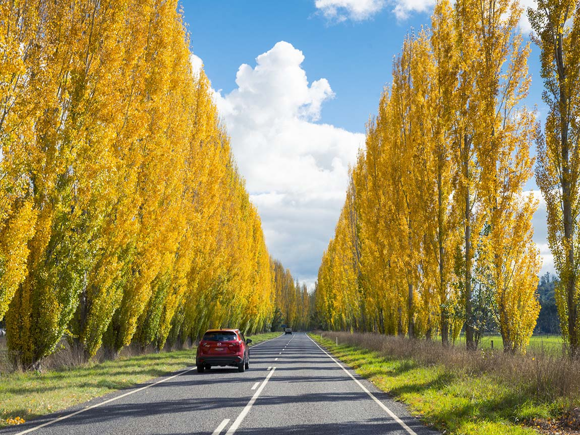 Road to Buxton, Yarra Valley and Dandenong Ranges, Victoria, Australia